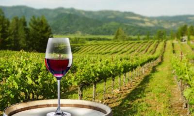 viñedos-vino-620x315